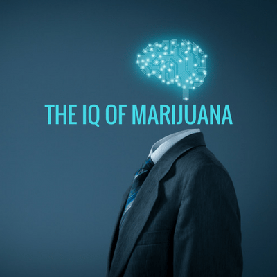 suit floating blue brain with words The IQ of Marijuana medicinal marijuana marijuana addicts